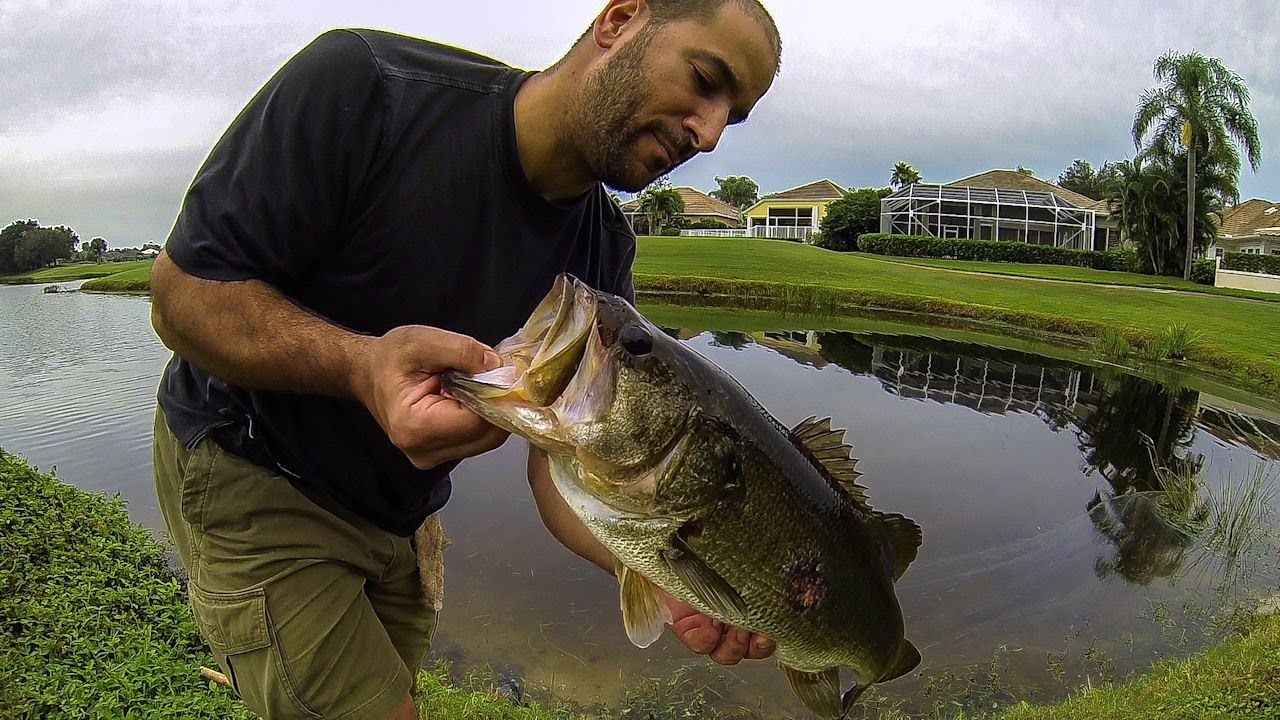Bass fishing giant florida golf course pond bass 2 youtube for Out of state fishing license florida