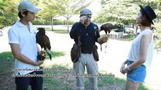 Pet Society - Falcon Ep.1-3
