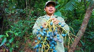 KHÁM PHÁ RỪNG GIÀ: TẬP 2 _ Ăn cơm với trái cây rừng, cá suối và thú rừng