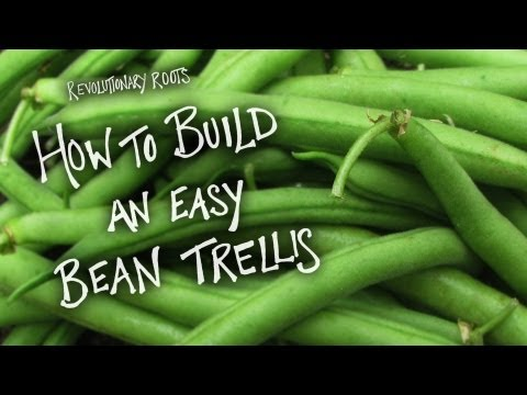 How to Build an Easy Bean Trellis - Farming/Gardening Lesson - Revolutionary Roots