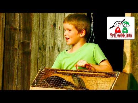 Spievankovo - O zajačikoch