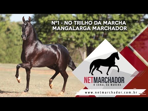 Nº1- No Trilho da Marcha - Mangalarga Marchador - NET MARCHADOR 27/08/2017