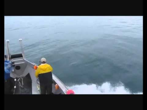 Salmon Drift Net Fishing in Cook Inlet 7-14-12