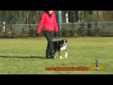 Video zu Deutscher Boxer