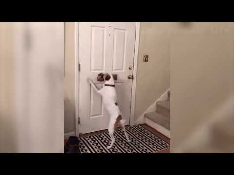 Funniest Dogs and Cats - Awesome Funny Pet Animals Life Videos  # 1