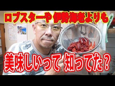 アメリカザリガニの画像 p1_30