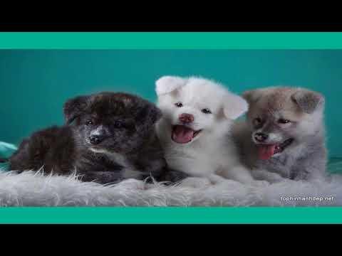 Những hình ảnh hài hước nhất thế giới về chó và mèo