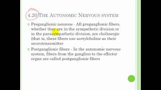 Chapter 8 The Nervous system Part 3