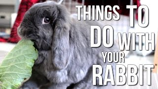 Things To Do With Your Rabbit