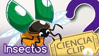 ¿Cualquier bicho es un insecto?