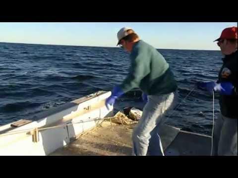 PROFUNDIDADES EN PELIGRO 1 de 4   BBC   Planeta Azul La Vida En Los Oceanos 09 de 10