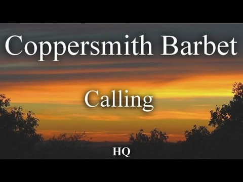 Coppersmith Barbet ~ Thailand ~ Calling HQ Audio