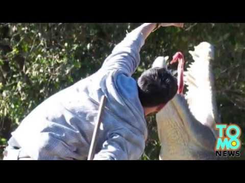 Zoo handler sa Australia, naatake ng isang 3.7 meter na buwaya!