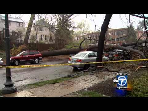 Wild weather topples trees onto homes, cars