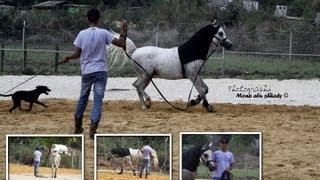 الخيول العربية...مهنة، حلم وطموح