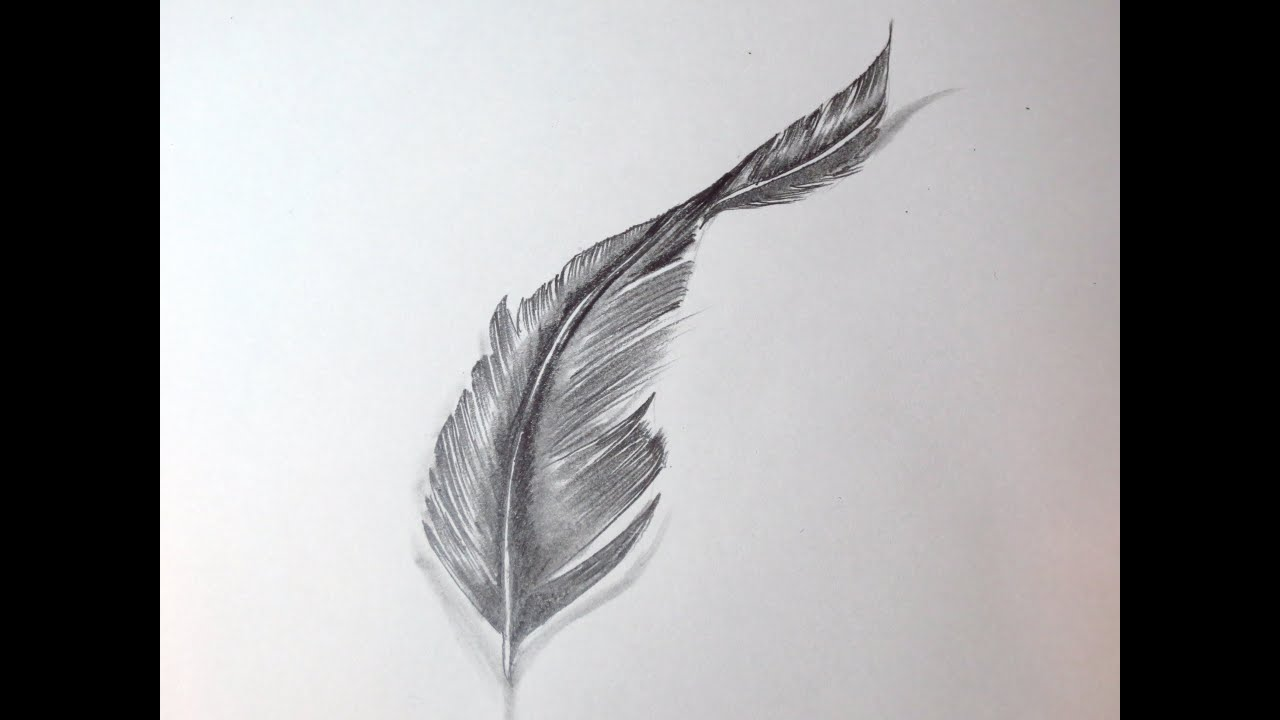 Gallery For gt How To Draw A Feather Tattoo Step By