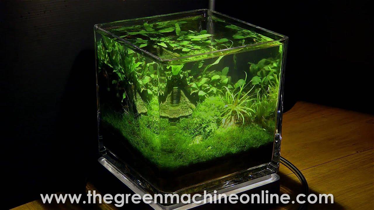 Planted Nano Pico Aquarium Aquascape by The Green Machine - YouTube