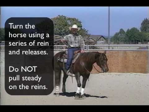 how to train a horse to spin