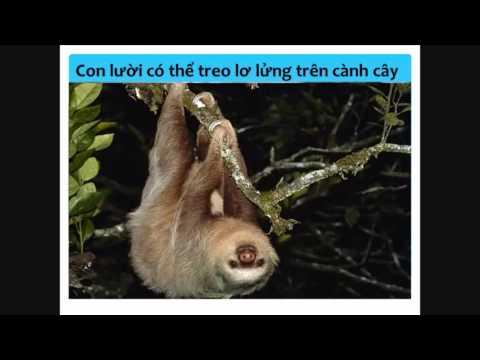 Dạy trẻ học-Động vật sống trong rừng Amazone.