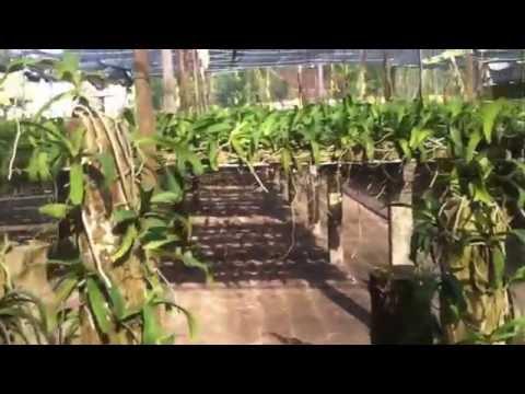 Vườn Lan Ngọc Điểm Trồng Thớt cực đẹp - Repost