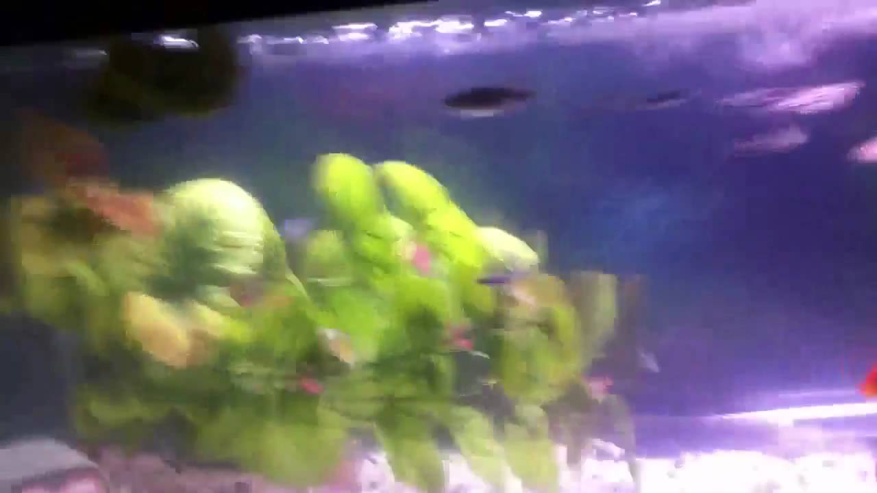 ammonia in fish tank how to get rid of it