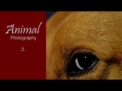 Photography: Animal Shootings #2 - Dogs (HD video/slideshow)