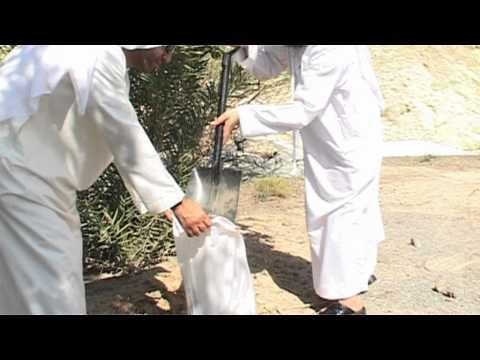 SIB Planting Spirit of the Union Palm Tree - مشروع زراعة نخلة روح الاتحاد
