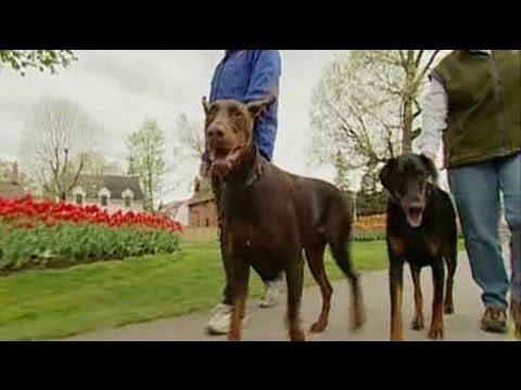 0 Meet the Dogs with Jobs   Zelda, Azili, Amy and Emma