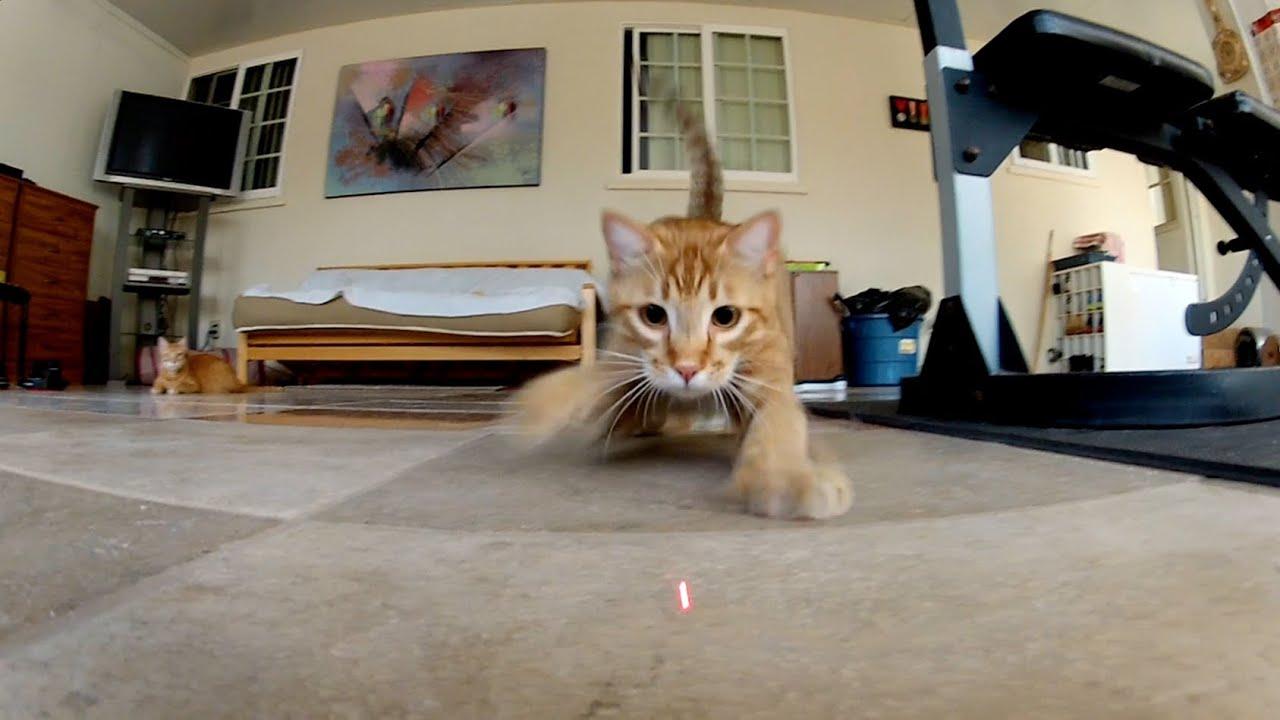 Publicité GoPro – Les chats et le laser