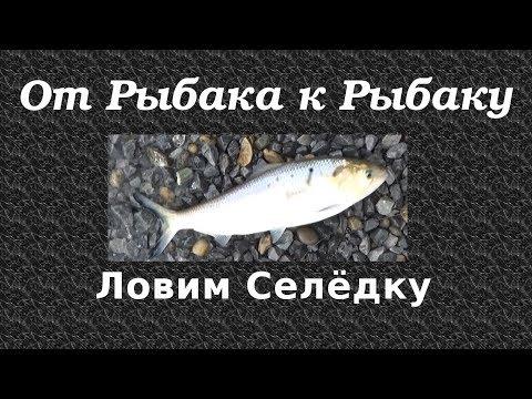 Чем раззадорить окуня в глухозимье  Рыбалка  Охотникиру