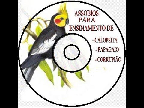 CANTO PARA CALOPSITAS - PICA PAU