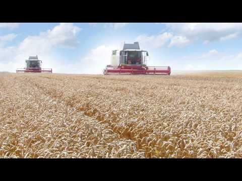 Wheat Products: Atta, Maida,Semolina, Bran from Diamond Roller Flour Mills: Corporate Video (Arabic)