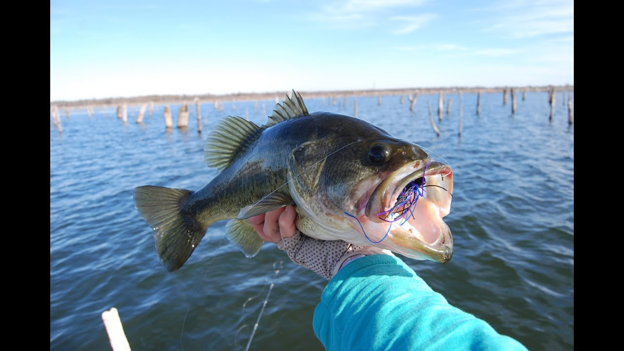 How to catch bass in early winter crankbait jig for Texas rig bass fishing