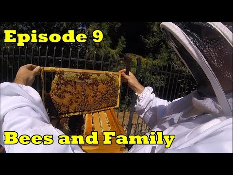 Flow Hive - Episode 9 -  Bees and Family
