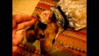 Lustige Hundevideos total witzig und lustig