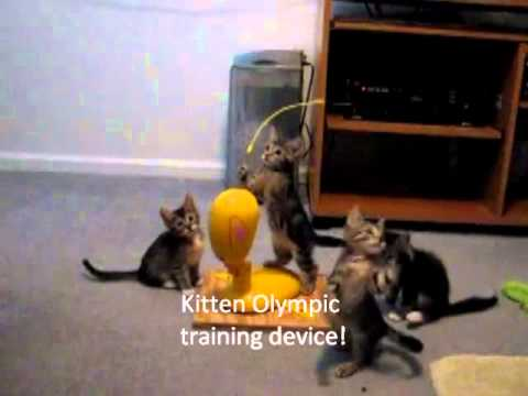 Cute Kittens. Funny things they do. You will laugh! FUNNY, Kittens playing, jumping, crashing, climbing and simply making you laugh! Subscribe to my site for new videos. Please leave comments and don't forget to like...