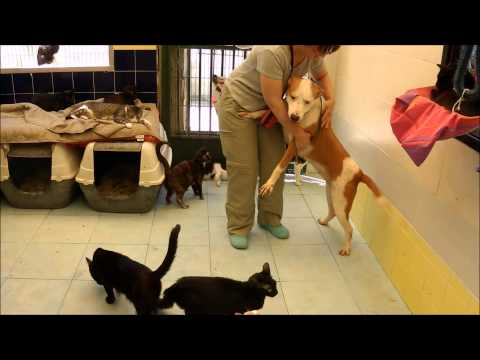 Animalinneed: Viva visiting the cats