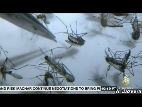 Chikungunya: The Mosquito-Borne Virus Explained