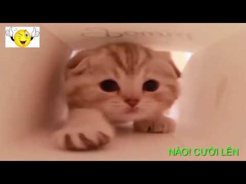 Những Chú Mèo Hài Hước Nhất Hành Tinh