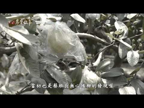 高雄農業故事館-芭樂(影片長度:15分31秒)