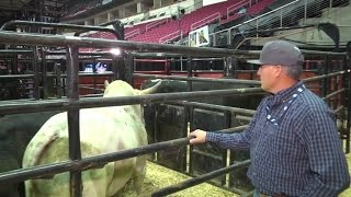 PBR Bull Care: Troy Brown