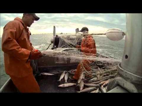 Bristol Bay Alaska 2013 Pacific Drifter Capt. Dan Agen