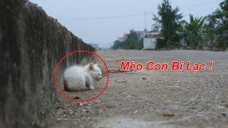 NTN - Nhặt Được Mèo Con Ngoài Đường ( Stray Kitten )