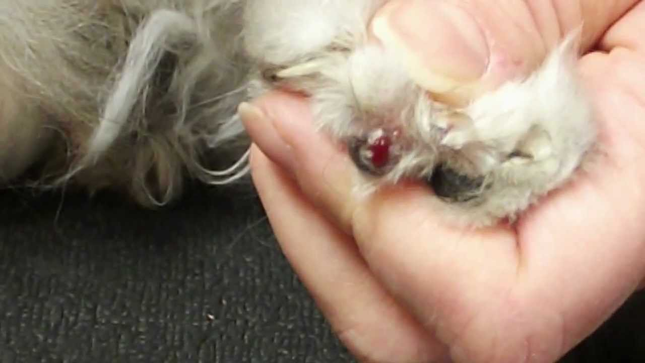 Where To Get Cat S Toe Nails Clipped