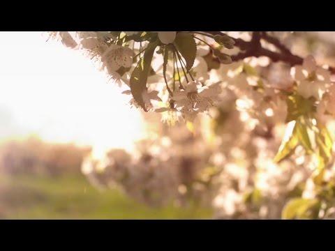 Tavaszi Szél