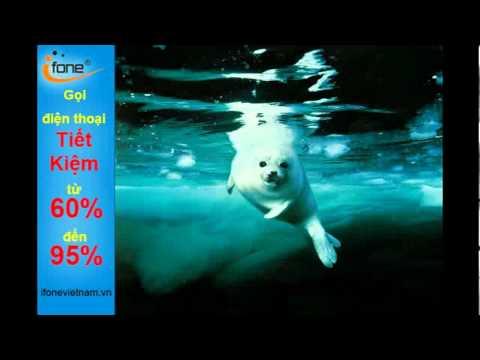 Ảnh động vật đại dương đẹp 'thót tim' - điện thoại internet