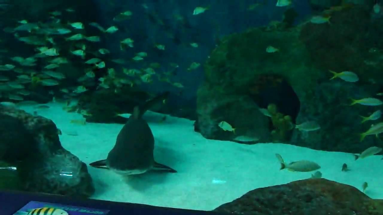 Ripley 39 S Aquarium Myrtle Beach Sc Youtube