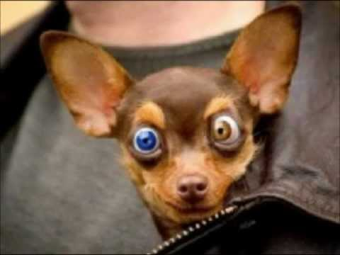 Funny dogs videos, Funny