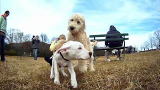 Вижте ЖИВОТА на кучетата през ТЕХНИТЕ очи! HD