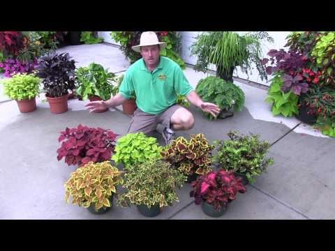 Foliage Plants: Part 2 (Shade Plants)